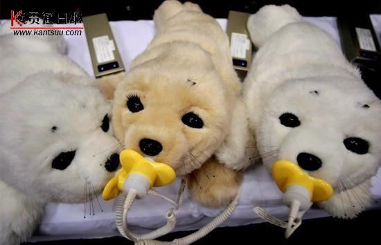 日本海豹机器人   2008年10月10日,日本产业技术综合研究所研制的用于陪伴老人和小孩的机器人Paro,在横滨举行的2008日本机器人展览会上充电。这种价值350000日元(3480美元)的机器人的外形像一只幼小的格陵兰海豹,毛皮和胡须下有一批传感器,可以对听觉、视觉和触觉刺激做出反映,减轻医院和疗养院里的患者的痛苦。   27.