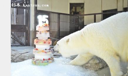 日本一动物园为北极熊庆生 准备5层冰块水果蛋糕