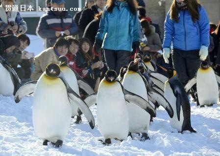 """始冬季""""企鹅散步""""活动"""