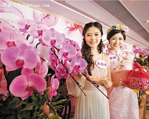 香港引入蝴蝶兰