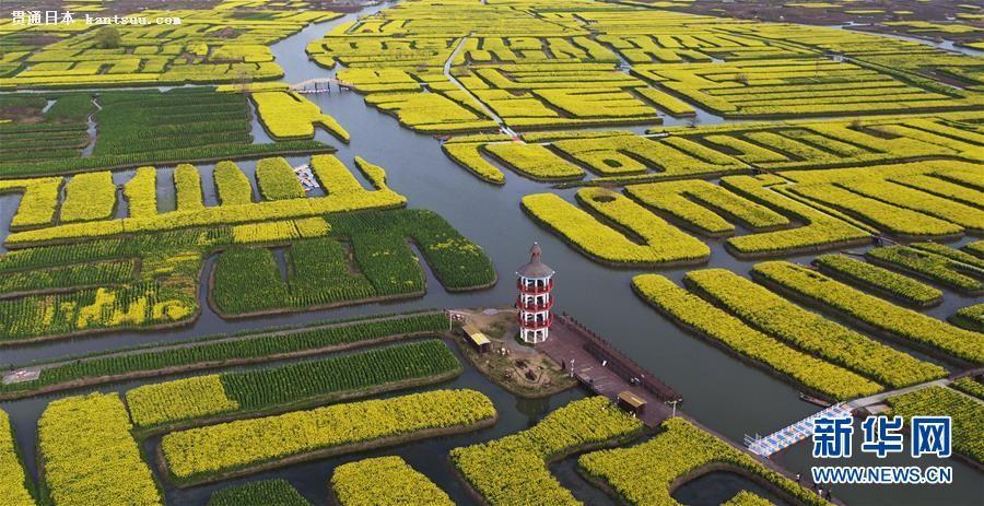 春真っ盛り、水郷を黄色く染める満開の菜の花畑