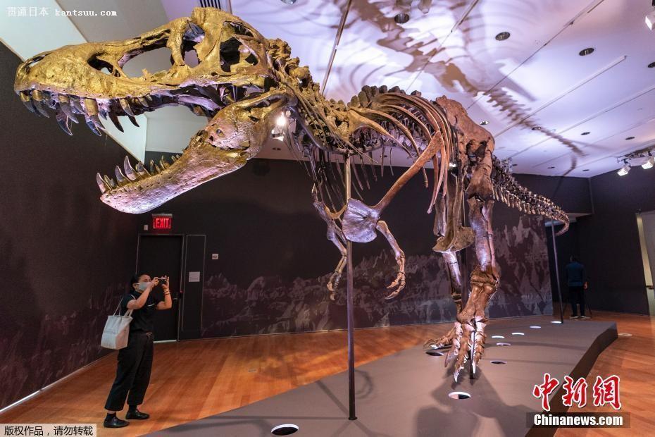 世界最大のT・レックス化石の落札��格は�@きの2750万ドル!